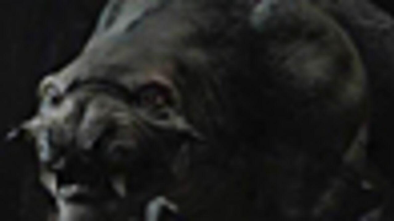 L'envers du décors : la bête de The Hunt